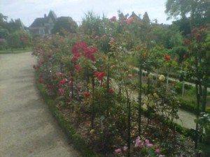 rose, longévité, roseraie, thabor, jardin, rennes