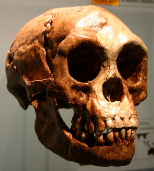 Homo floresiensis, florès, chine, plos one, nouvelle homme, âge de pierre