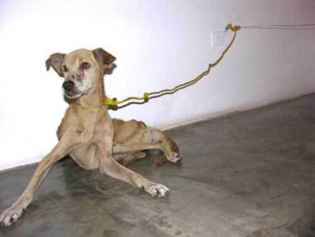 Guillermo Vargas, chien, honduras, 2007, art contemporain, tortart