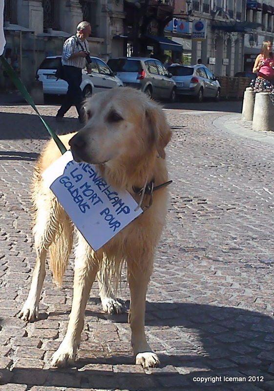 fondation bardot, Mézilles, souffrance,  animaux,  laboratoires, chiens, Mezilles, gircor,  expérimentation, exploitation animales, manifestation, élevage