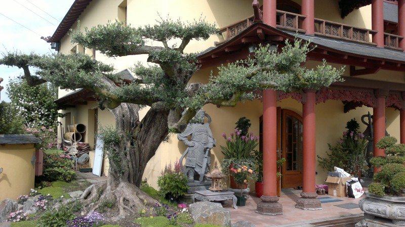 Pagode, bouddhiste, Van Hanh, Dharma, bouddhisme, Nantes, Saint-Herblain, Bodhidharma, Thich Nguyen Loc, Bouddha