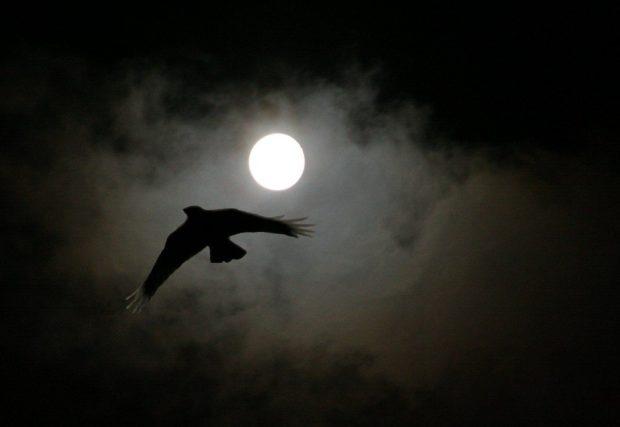 bois vol la nuit - photo #31