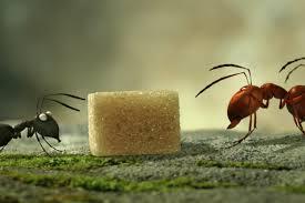 minuscule, film, animation, fourmis
