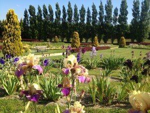 iris-istibles, iris'istibles, jardin, jardins, brocéliande, fleurs