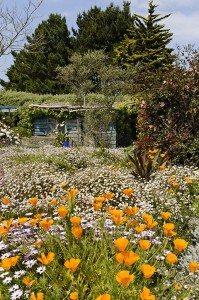 Le jardin eden du voyageur ou belle le par michel damblant for Le jardin voyageur