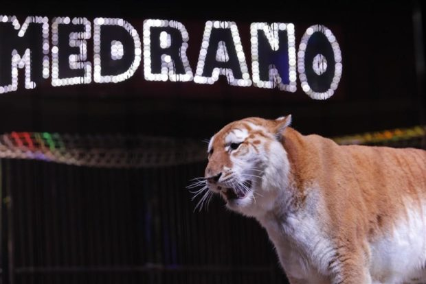 Le Cirque Medrano présente Aladdin et les 1 001 nuits ! Guingamp