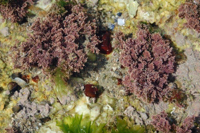 Algues et estran Pornichet