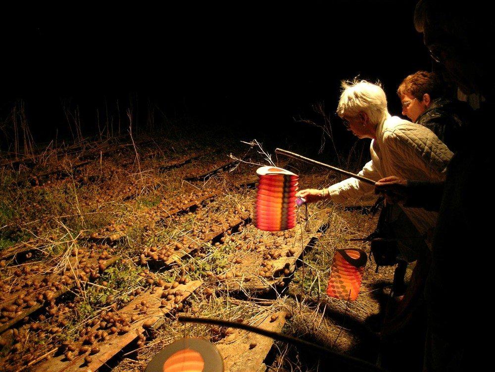 Découverte de la vie nocturne des escargots Seulline