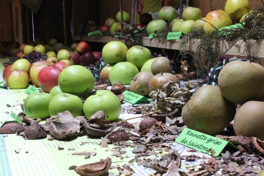 Expo d'pommes à la ferme-musée du Cotentin ! Sainte-Mère-Église