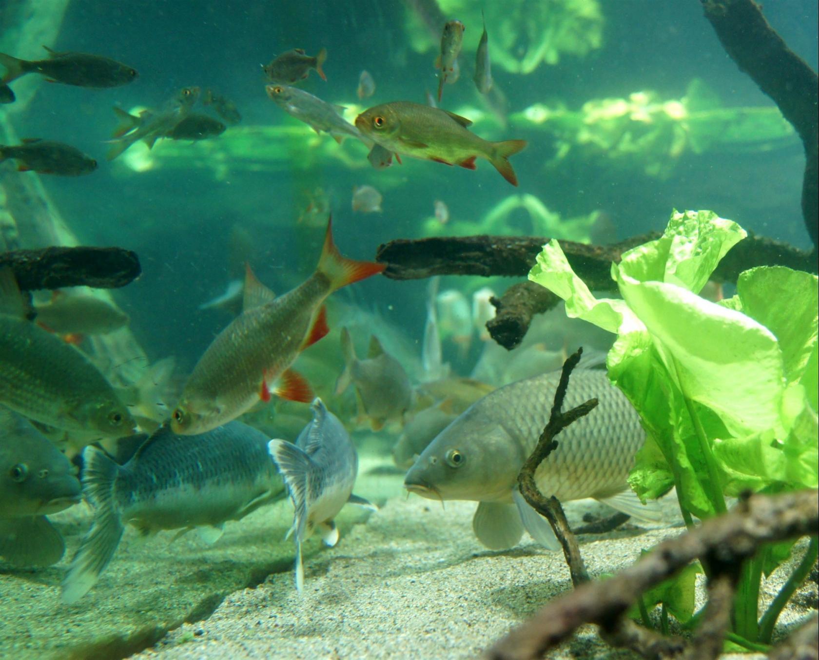 L'aquarium des curieux de nature Belle-Isle-en-Terre