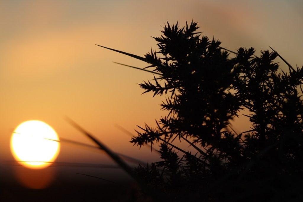 Les marais à l'aurore Carentan-les-Marais
