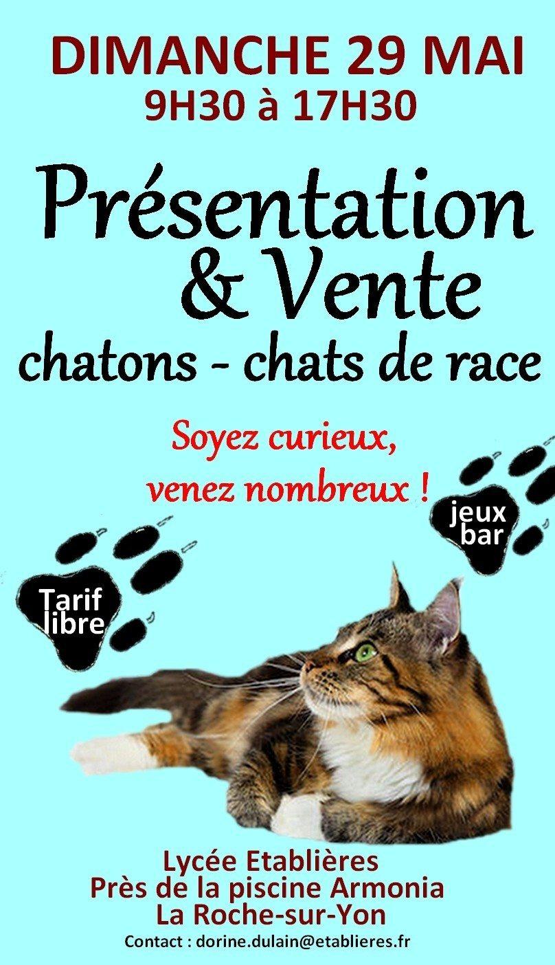Présentation féline La Roche-sur-Yon