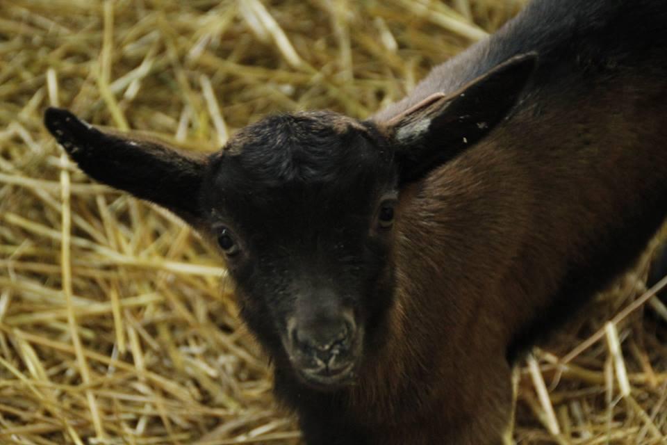 agneau_tous-a-la-ferme_agriculteurs-bretons