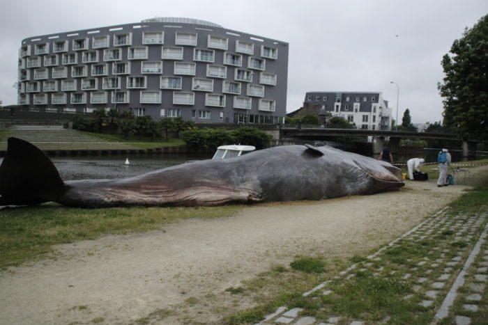 baleine quai saint cyr rennes