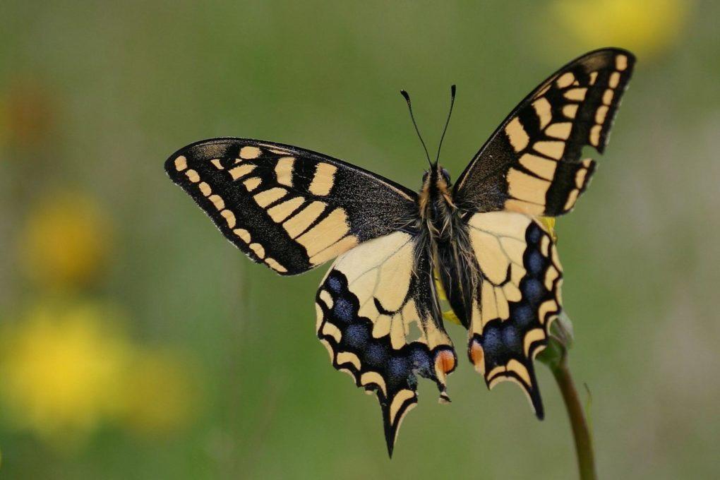 À la chasse aux papillons Le Cloître-Saint-Thégonnec