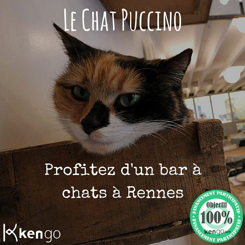 rennes ouverture du chat puccino un bar chats unidivers. Black Bedroom Furniture Sets. Home Design Ideas