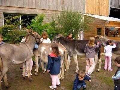Découverte de l'âne et de la ferme Lanvéoc