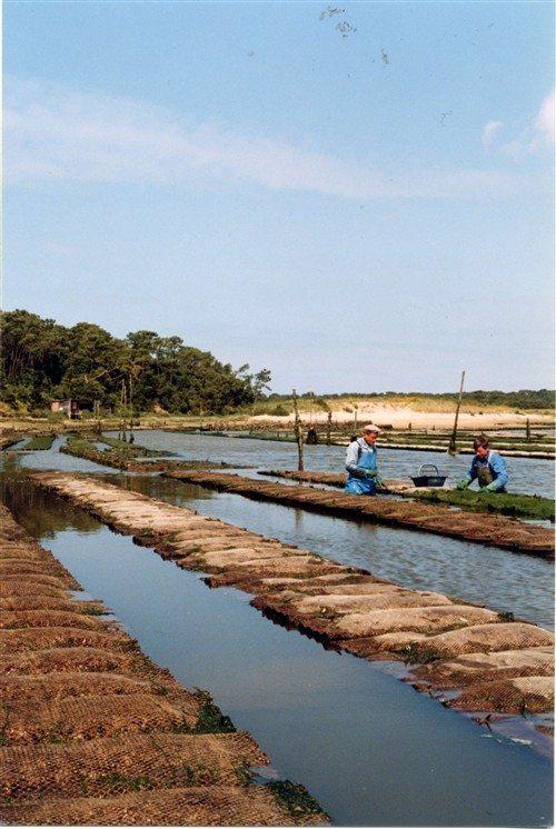 Découverte des parcs à huîtres Talmont-Saint-Hilaire