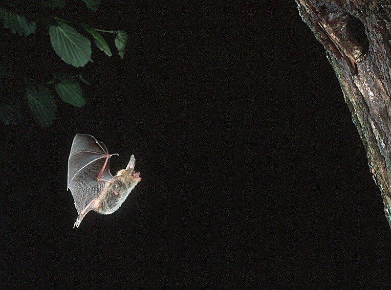 Nuit européenne de la chauve-souris Saumur