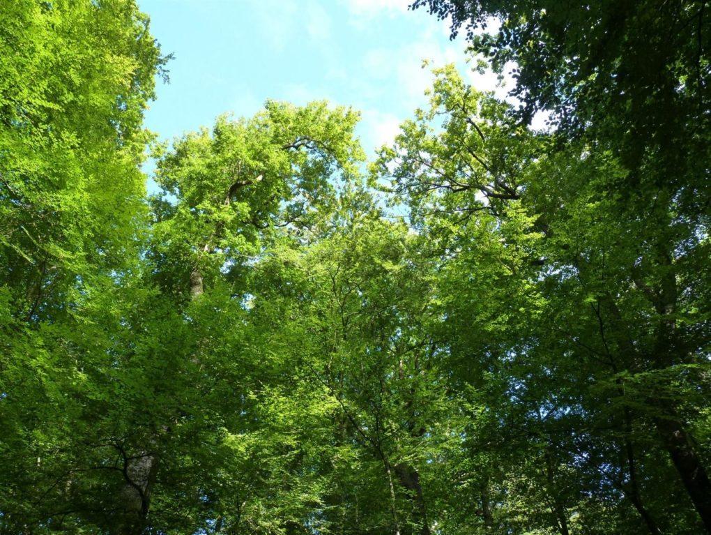 Sortie en forêt à la découverte des champignons Jupilles