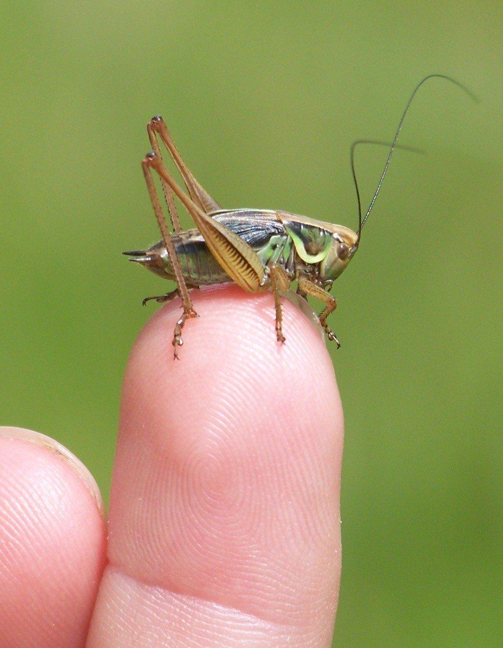 Sortie guidée : insectes à vue L'Île-d'Olonne