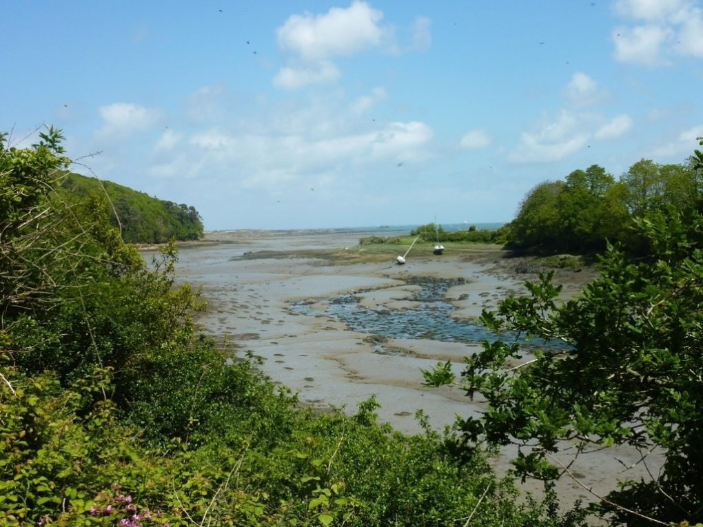 Sortie sur les oiseaux de la Baie de l'Enfer Plouguiel