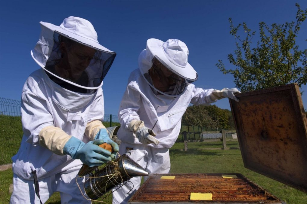 Tout savoir sur l'abeille, la ruche et le miel Rennes