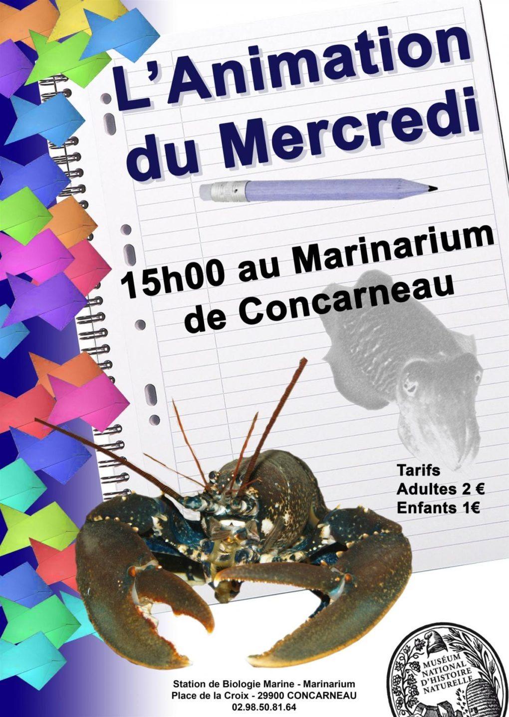 Animation au marinarium Concarneau
