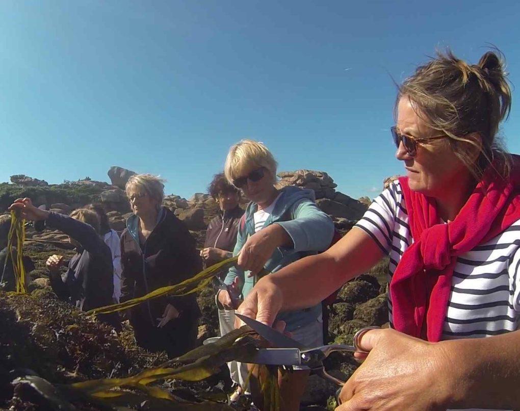 Bien être Origin'Algue : découverte et atelier cuisine aux algues Perros-Guirec