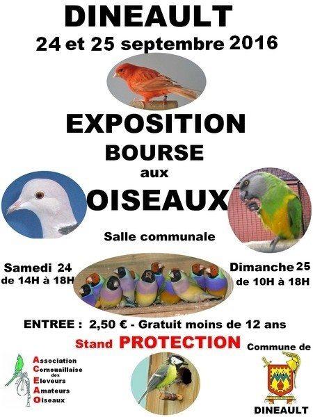 Bourse d'oiseaux exotiques Dinéault