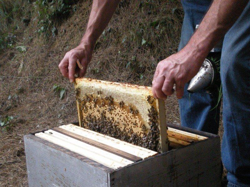 Découverte commentée : le rucher de la forêt d'Andaine Bagnoles-de-l'Orne-Normandie