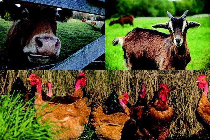 Découverte du terroir : la ferme du bois Loré Bagnoles-de-l'Orne-Normandie