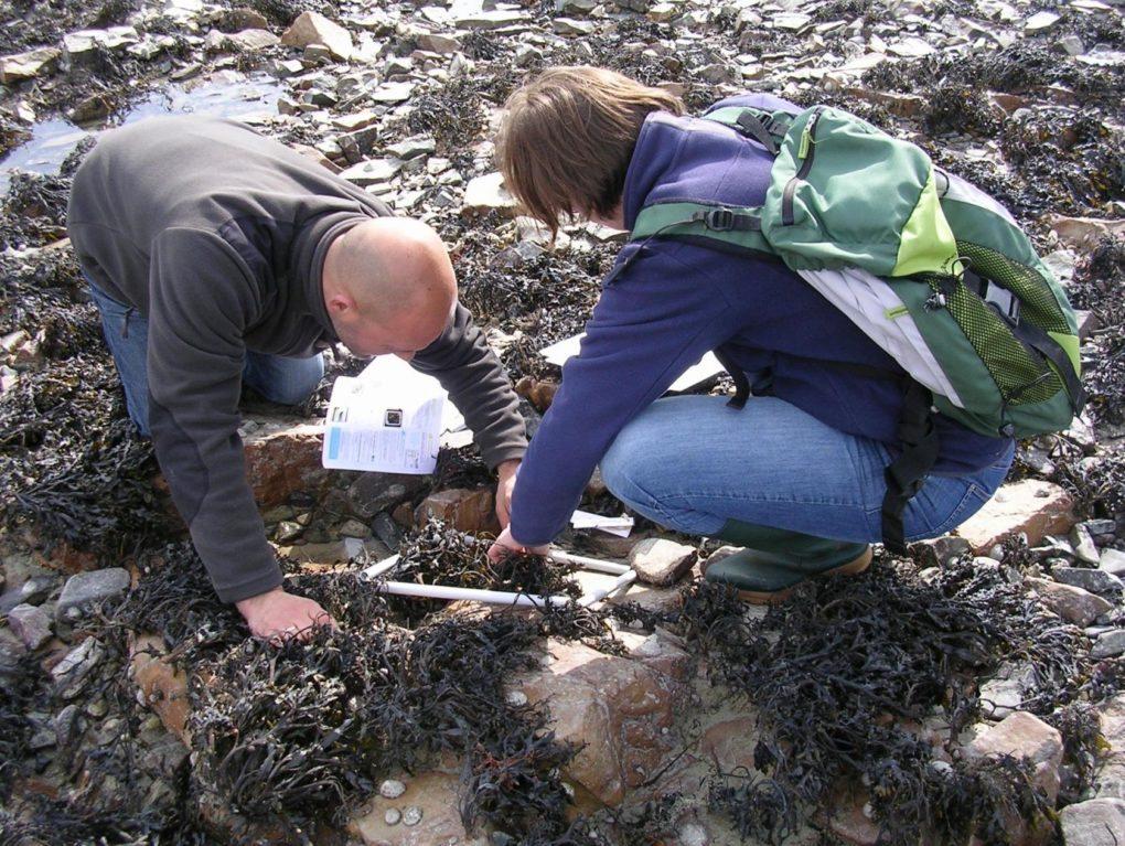 Inventaire de la biodiversité du littoral à Pirou Pirou