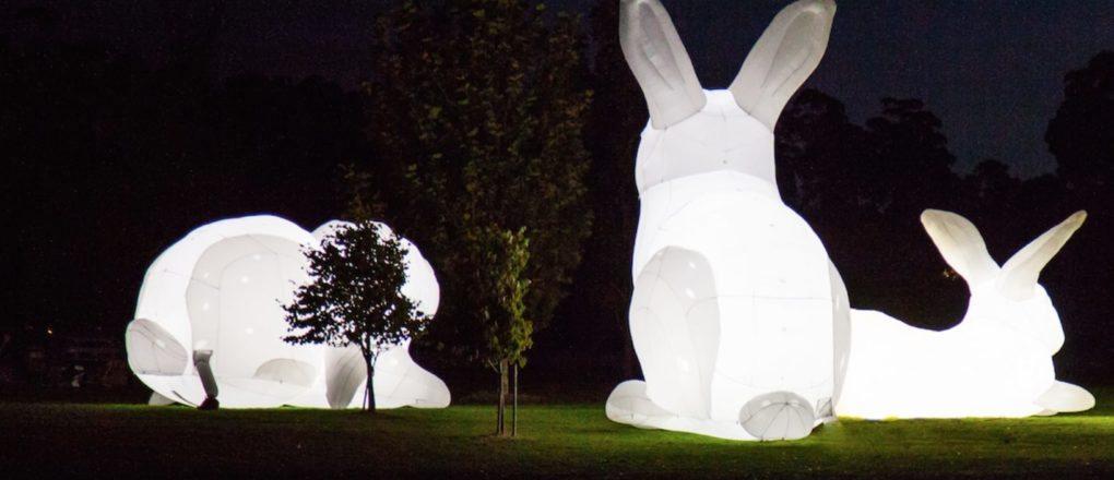 lapins géants