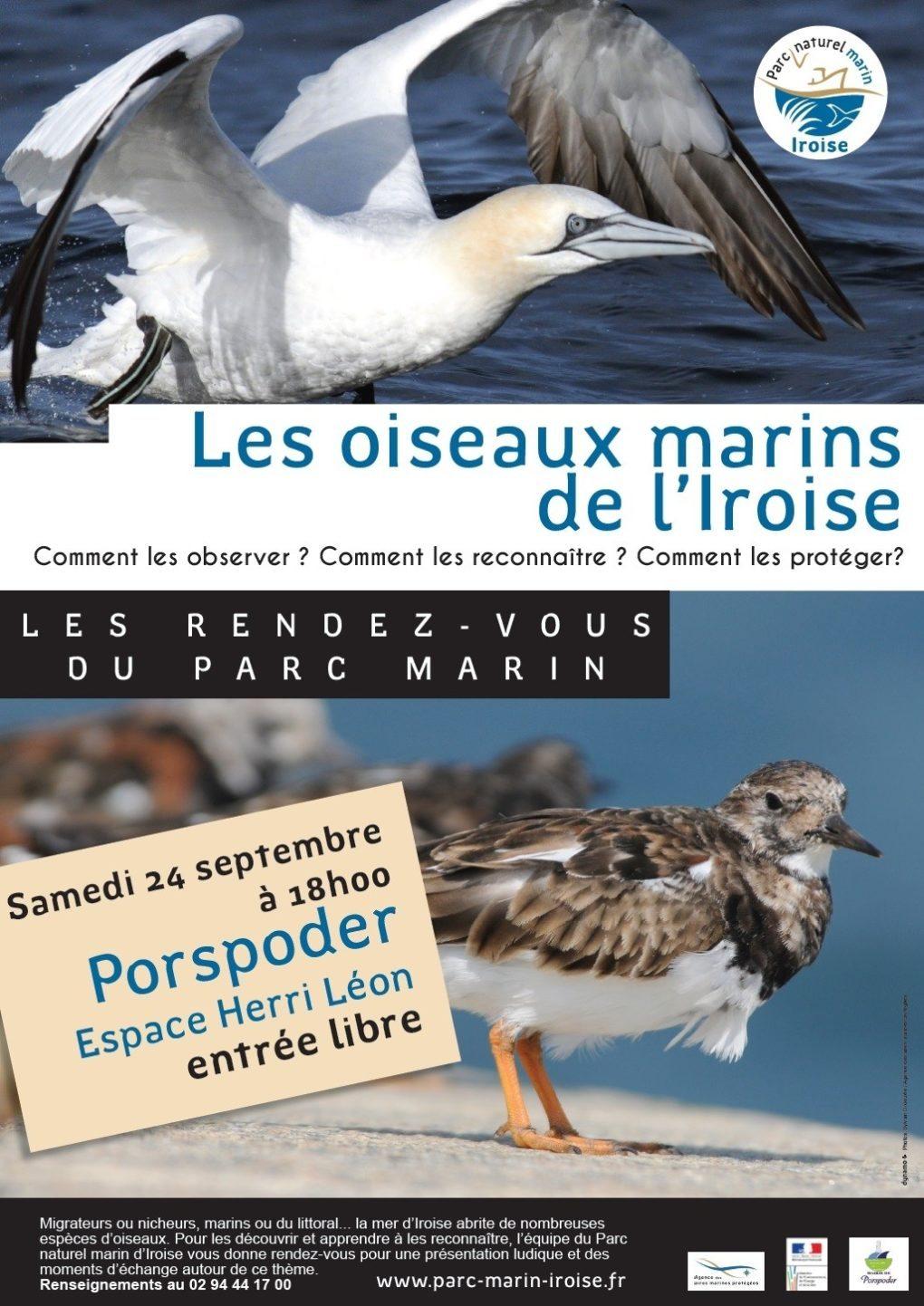 Les oiseaux marins de l'Iroise Porspoder