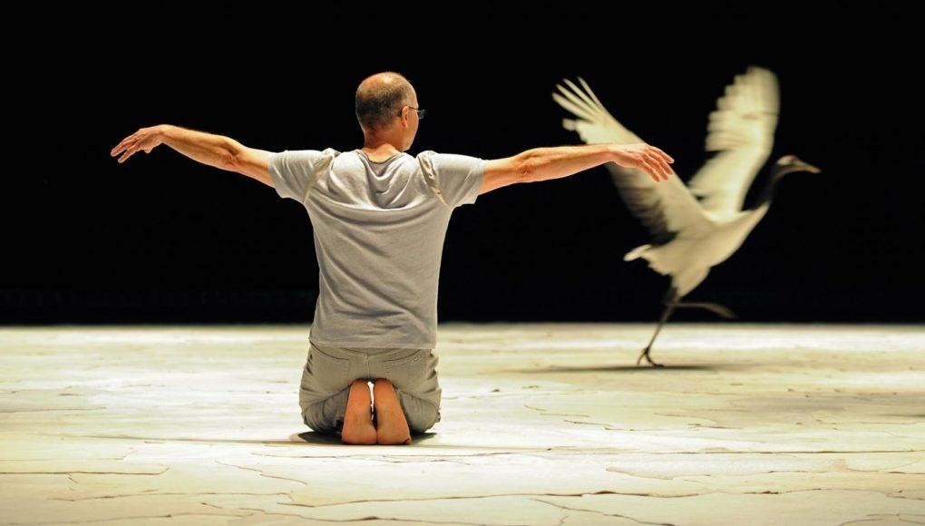 Light Bird - Luc Petton / Marilén Iglésias Breuker La Roche-sur-Yon