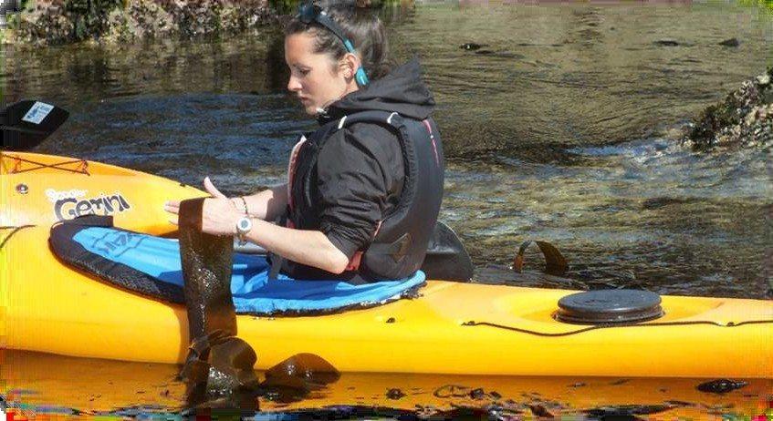 Sous la pagaie : les algues Trégastel