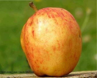 Spectacle : Pomme Nouvelle Bonne Nouvelle Bédée