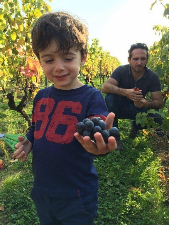 Vendanges manuelles en famille dans les vignes du Musée Val-du-Layon