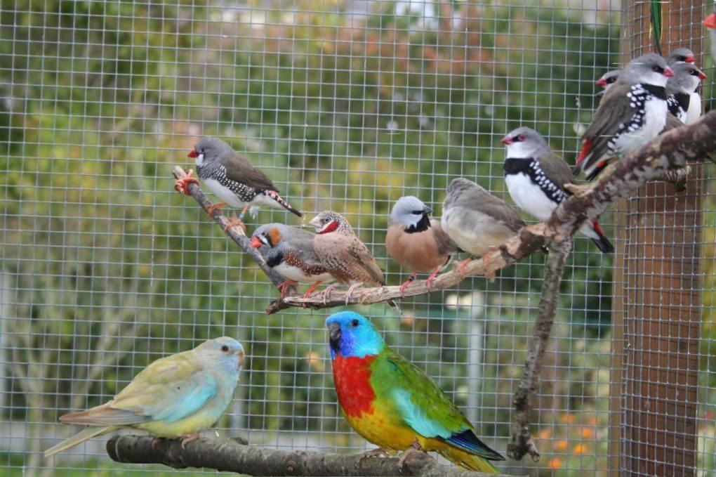 Bourse aux oiseaux de cages et de volières Talensac