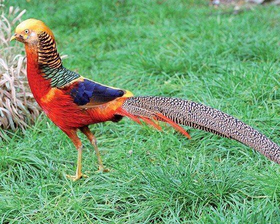 Foire aux oiseaux et volailles d'ornement Saint-Vincent-sur-Oust