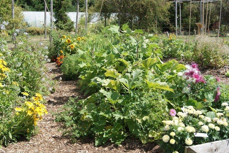 Jardiner au naturel : les décoctions au jardin La Roche-sur-Yon