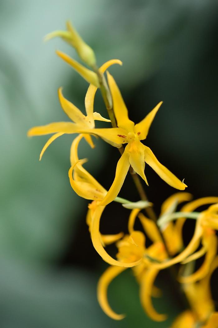 exposition florale mille et une orchid es aux grandes serres jardin des plantes du mus um. Black Bedroom Furniture Sets. Home Design Ideas