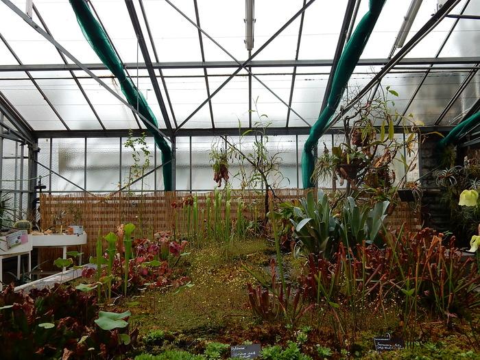 plante carnivore jardi leclerc