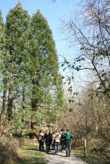 Grand jeu à la découverte de l'Arboretum du Petit-Charme