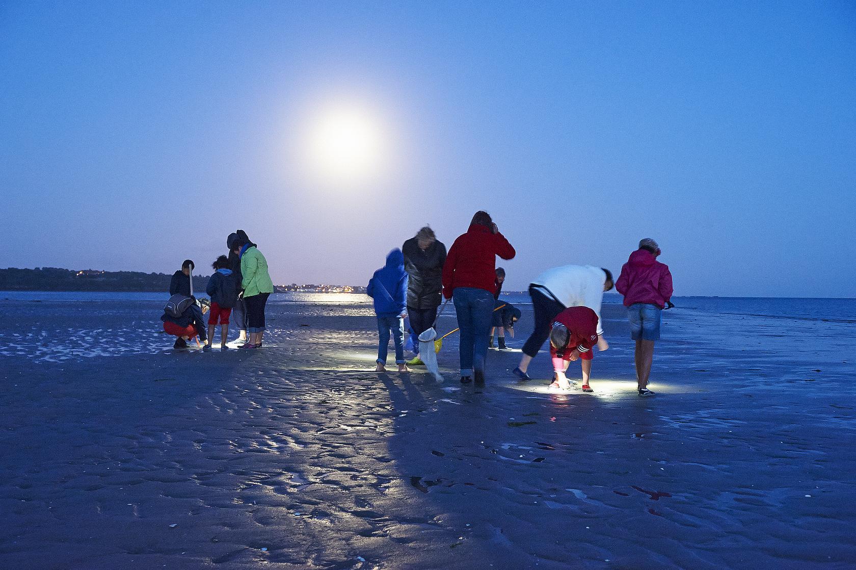 Sortie nature a la pleine lune grande maree la foret - Office de tourisme la foret fouesnant ...