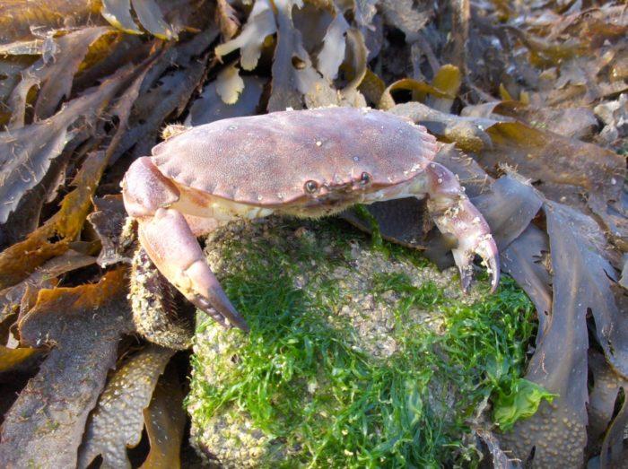 Sortie nature : A marée basse Plougrescant