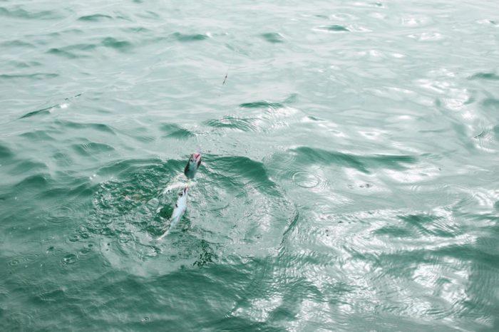 Sortie pêche en mer Binic