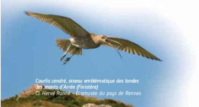 ECOMUSÉE DE RENNES LES LANDES DE BRETAGNE EXPOSITION
