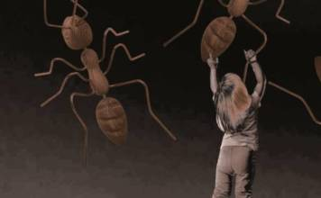exposition insect' inside Marc Georgeault les 3CHA, Chateaugiron